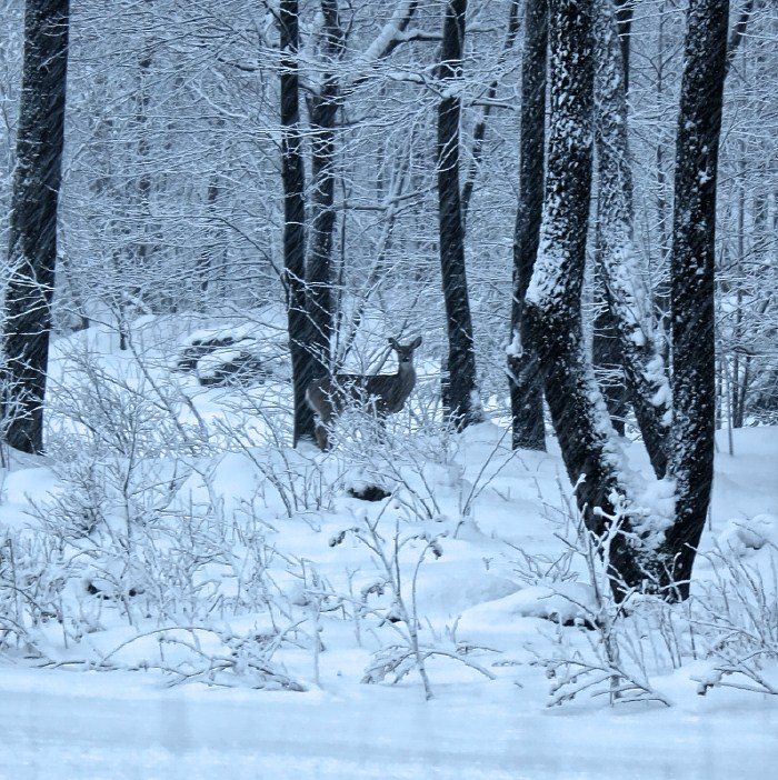 Winter Storm Alert Deep Creek Lake 1/21/16