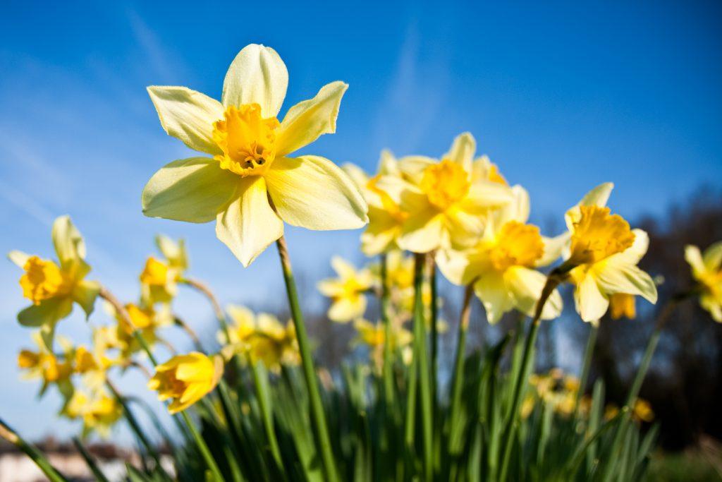 Deep Creek Spring Event Update